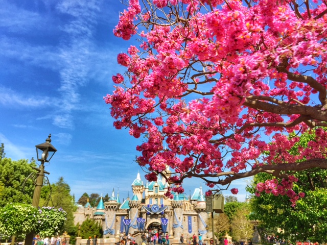 Sleeping Beauty's Castle on a Spring day